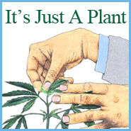 "New Book ""It's Just A Plant"" Makes It Easier To Talk To Your Kids About Marijuana"